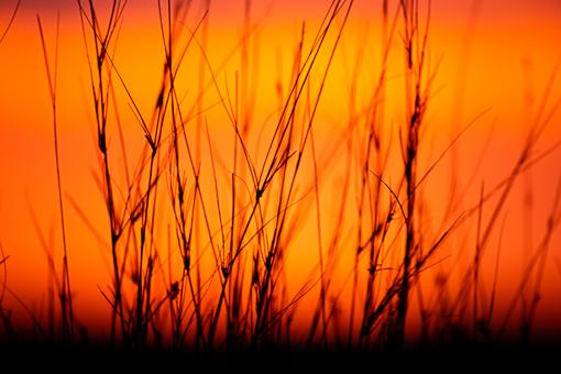 Kgalagadi Wildlife Grass at Sunset